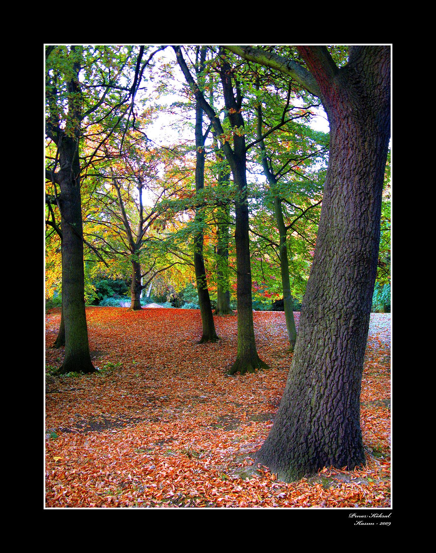 Düşen Yapraklar, Holland Park, Londra, Kasım 2009