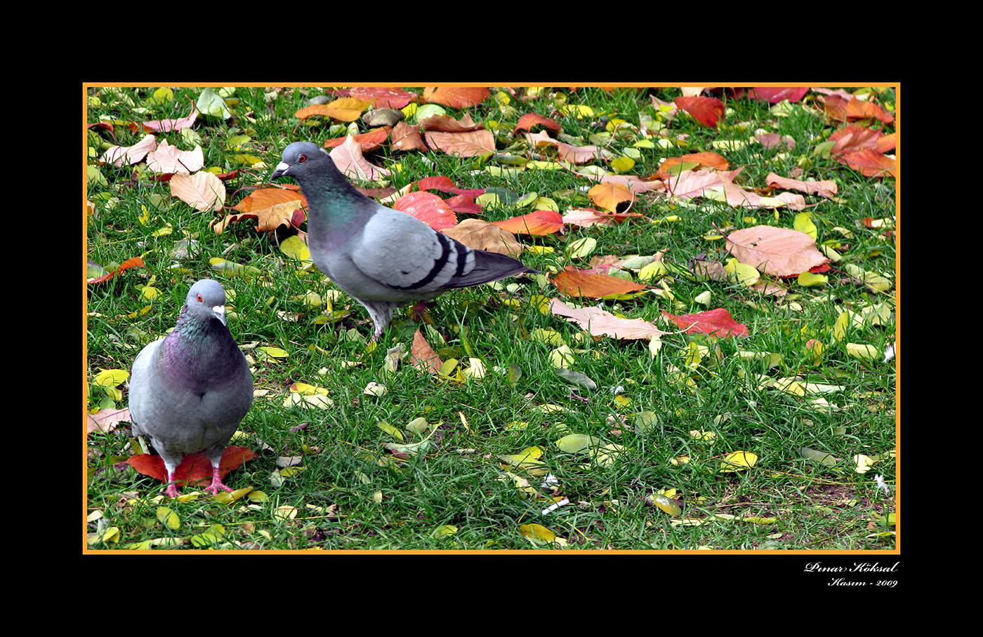 İkizlerim, Holland Park, Londra, Kasım 2009