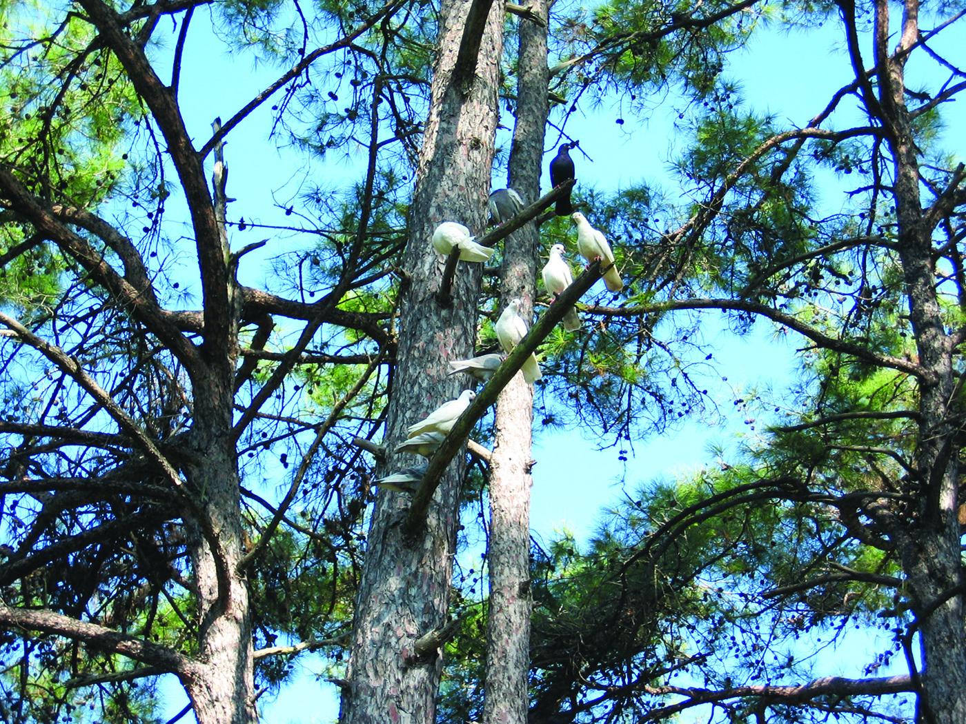 Kuşların Senfonisi, Gökova, Bodrum, Ekim 2006